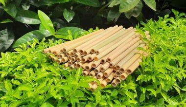 bamboo-straws-wholesale